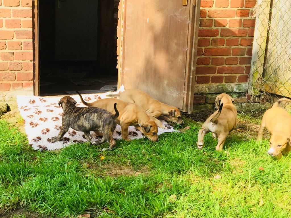 Dog Show November   Chilliwack Bc